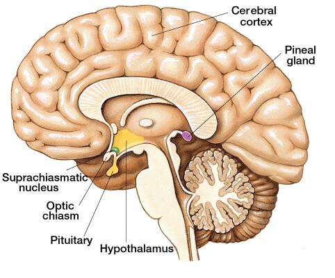 Simptome cancer talamus. SFATUL SPECIALISTULUI