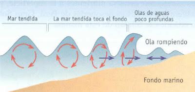 ¿Cómo se forman las olas? En la entrada de hoy vamos a hablar sobre un singular fenómeno que es el responsable que de surjan las olas. Y es que la fricción del viento sobre la superficie de las aguas es lo que produce este efecto de atracción y retracción en nuestros mares. Las olas marinas son la consecuencia directa del movimiento que se da en la atmosfera y en el agua. Los cambios de presión hacen que el líquido oscile sobre la superficie y a su vez el viento lo empuja formando esas ondas capilares que son tan características. Y al contrario de lo que se pudiera pensar, si este empuje es muy leve las ondas que se producen sobre el agua serán mucho más intensas. Las olas altas Sin embargo, cuando hablamos del viento tenemos que admitir que cuánto más fuerte sople más altas serán las olas que provoque. En este punto entran en juego distintos elementos como la velocidad e intensidad de la fuerza eólica, la dirección o estabilidad de las corrientes, así como la superficie total y su profundidad.  Es por ello que a medida que nos vamos acercando  la orilla, las olas comienzan a avanzar mucho más despacio debido a la falta de profundidad y esto hace que aumenten en altura. El proceso se acelera cuando la parte superior se mueve más rápido que la subacuática, lo que la desestabiliza y hace que se rompa.  Tipo de olas Además de este tipo de olas, encontramos otras cuyo origen es muy distinto. Nos estamos refiriendo a aquellas que se originan en el fondo del mar, que son generalmente más bajas y redondeadas que las anteriores. Estas olas en alta mar surgen por la diferencia de temperatura, presión y salinidad de las distintas zonas de agua que están cercanas entre sí, lo que provoca su movimiento hacia áreas de menor densidad de líquido.