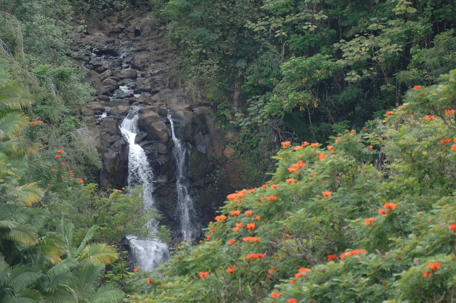 Rainforest On The Big Island: Honeymoons And Destination Wedding Travel Packages To