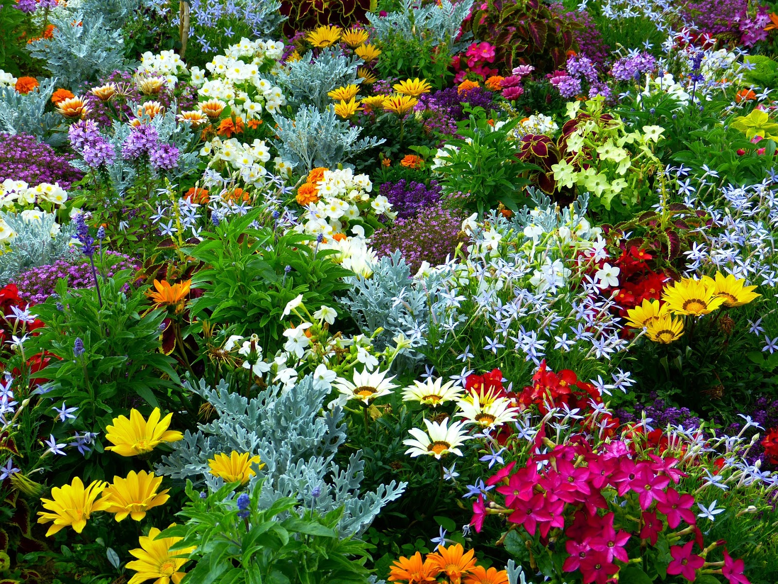 Star nursery blog how to have a flower garden with less work for Garden trees b q