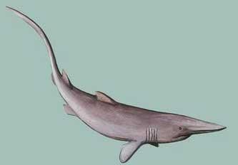 tubarão-duende (Mitsukurina owstoni)