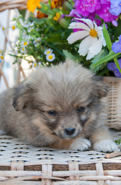A cute little puppy feeling sleepy by a flower pot