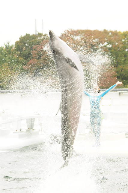 Dolphin show at Kyoto Aquarium