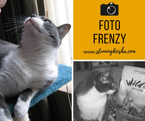 Friday Foto Follies Selected by Kitties Blue