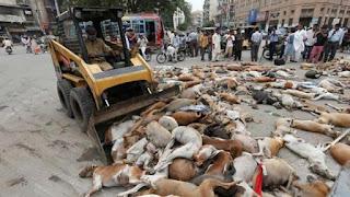 Los cuerpos de los animales asesinados fueron amontonados en distintas esquinas de la ciudad para ser recogidos por el servicio de limpieza, destaca Infobae.com.