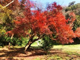 法華堂跡の紅葉