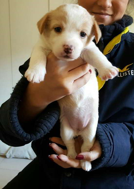 cachorra de talla pequeña mediana