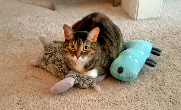 image of Sophie the Torbie Cat sitting on a nest she has made of the dogs' plushy toys