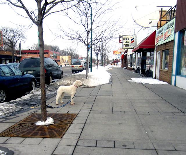 Twin City Sidewalks: Sidewalk Dogs #8