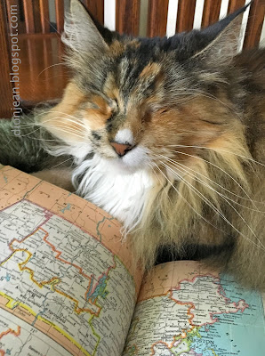 Lucy the cat with a map