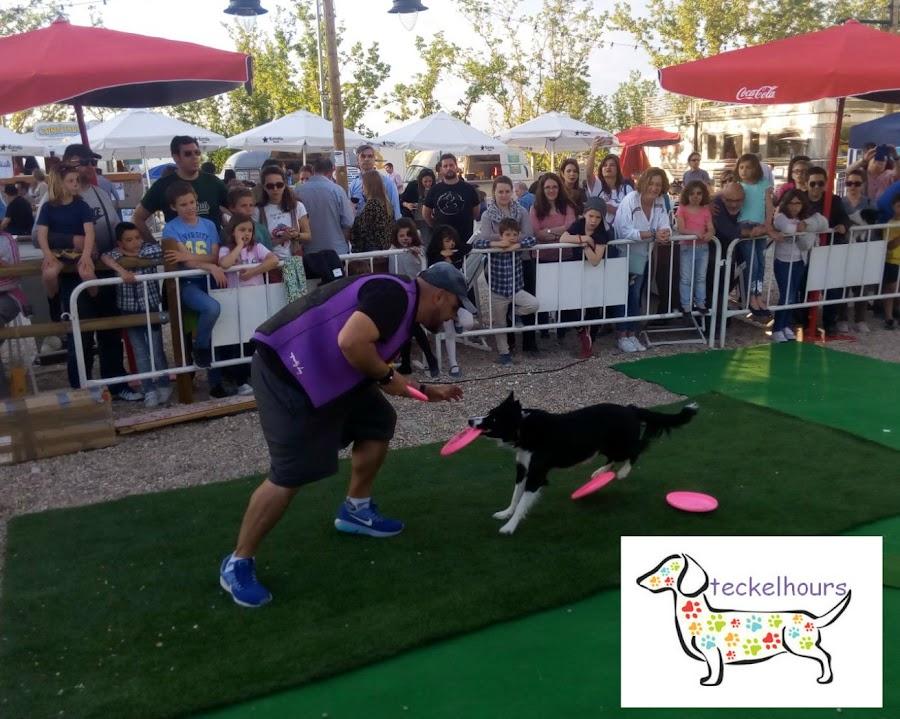 Exhibición Frisbee
