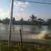 Lima Daerah Penghasil Udang di Indonesia