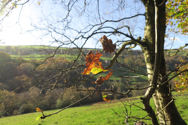 Oak leaf on autumn tree with view of fields and trees and hills beyond