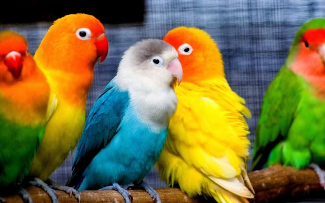 Fond+ecran+couleurs+oiseau+hd