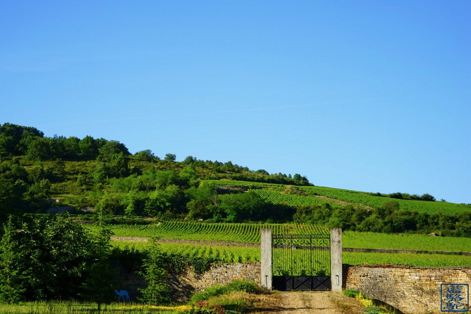 Le Chameau Bleu -  Portail de vigne à Santenay