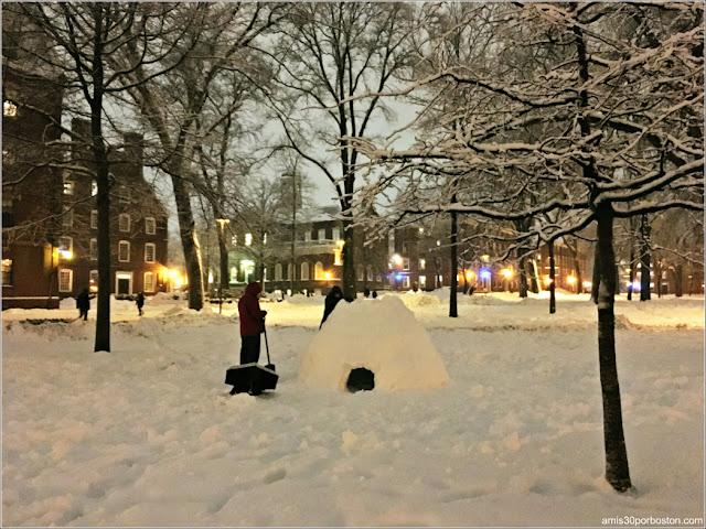 Iglú en Harvard Yard