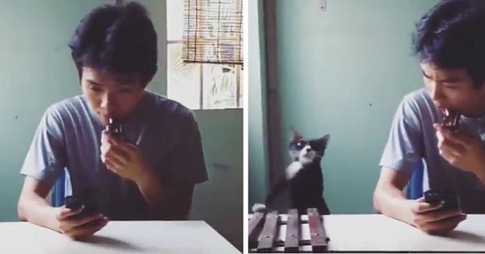 F**k this cat