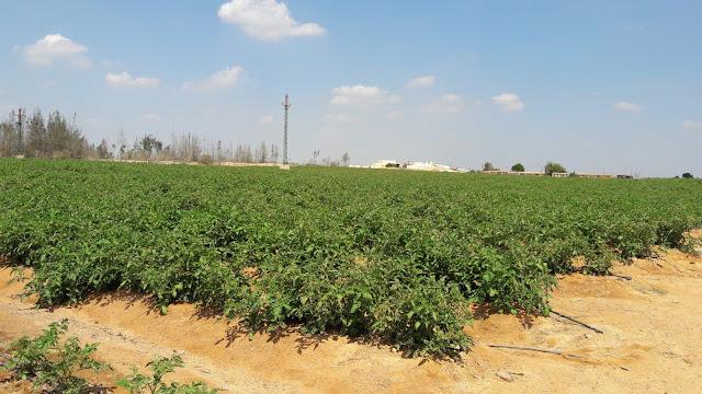مزرعة للبيع طريق مصر اسكندرية الصحراوي