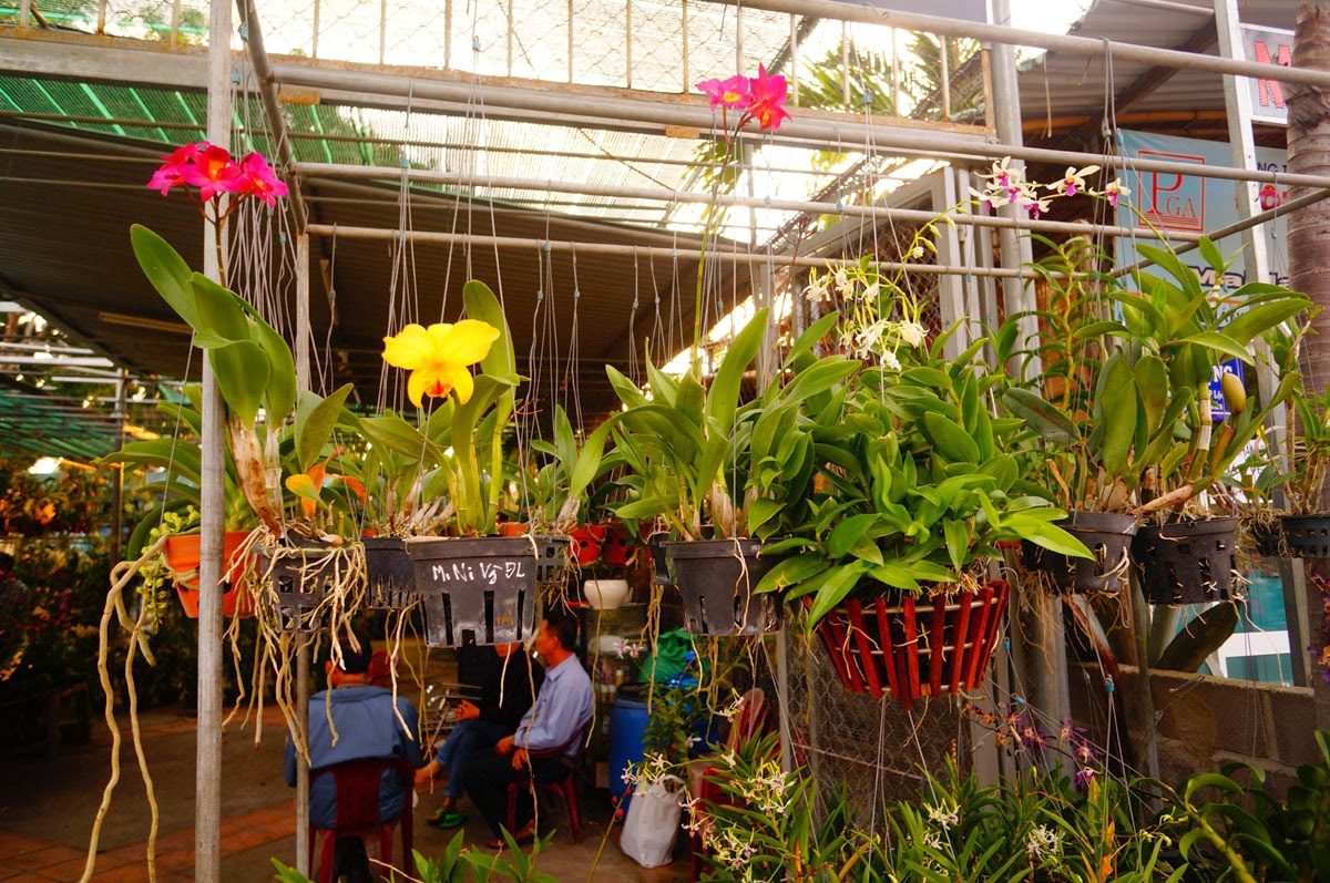 Вьетнам-Орхидеи