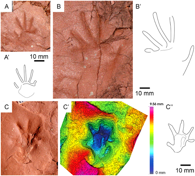Ancient reptile tracks in the Pyrenees may include evidence of new type of footprint