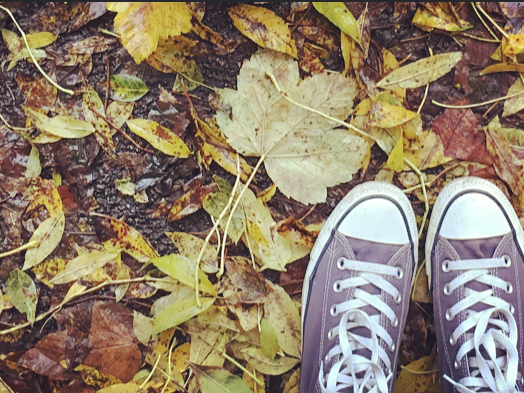 Converse amongst the autumn ground | Snaps