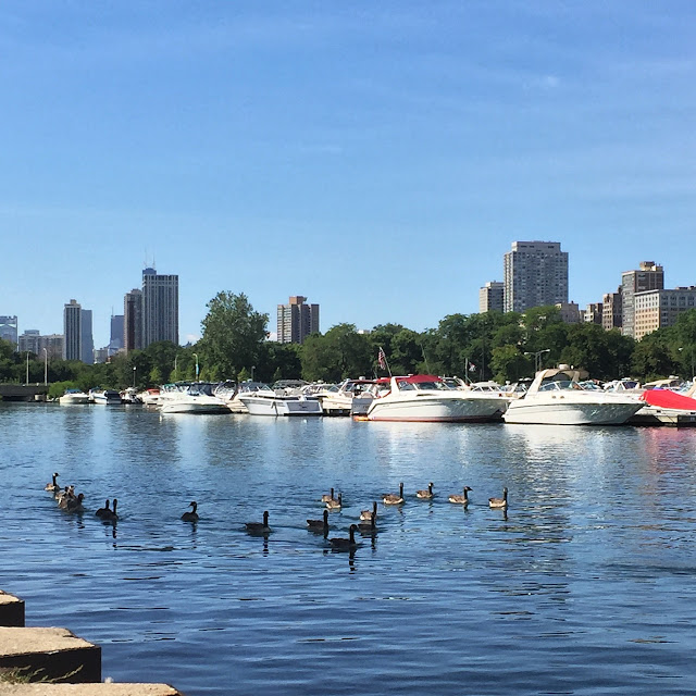 ducks in the harbor