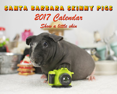 A calendar of glamour shots of hairless guinea pigs