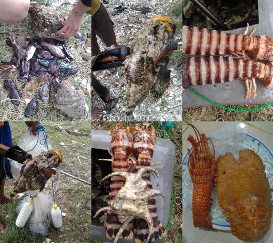 Seafood | Lobster | Ikan | Kerang