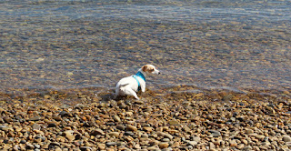Thelma venturing into the water