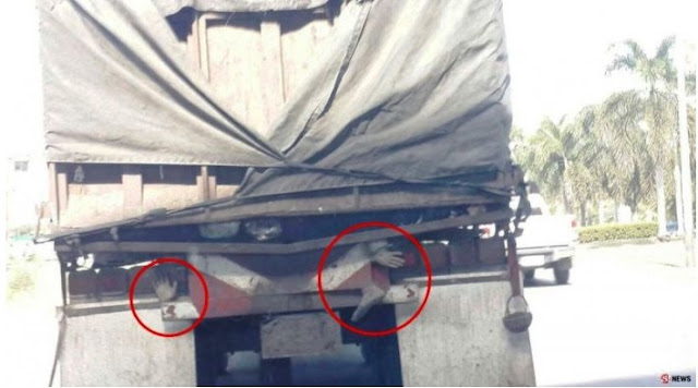 Pengendara Panik Lihat Tangan Mengintip di Belakang Truk Sampah, Keterangan Sopir Mencengangkan