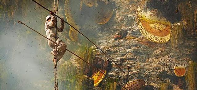 Έτσι συλλέγει ακόμη το μέλι, αρχαία φυλή του Νεπάλ από τις απόκρημνες πλαγιές των Ιμαλαΐων [εικόνες]