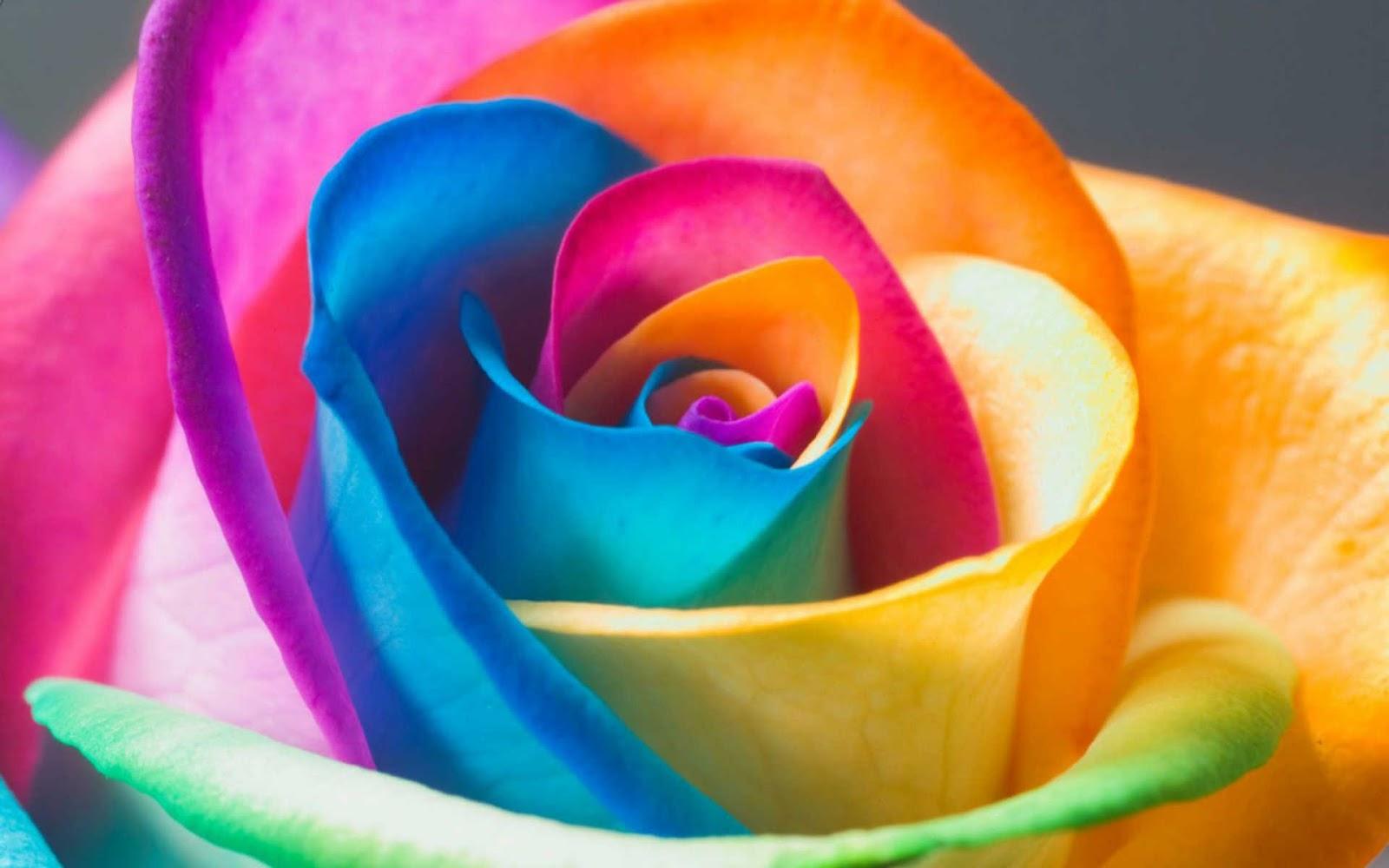 Gousicteco Neon Rainbow Roses Wallpaper Images