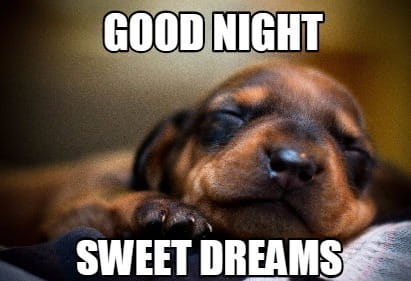 Very Cute and Funny Good Night Dog Image