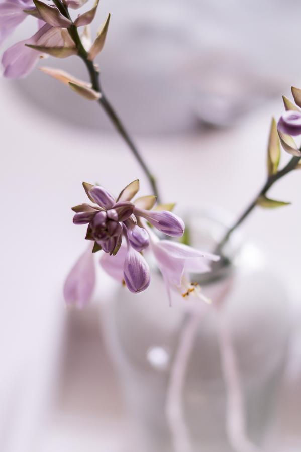 fim.works | Fotografie.Leben.Wohnen. | Floristik | Wenn die Funkie blüht