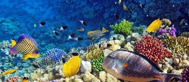 Gambar Ikan di Laut Hidup dari Jenis Konsumsi dan Ikan Hias