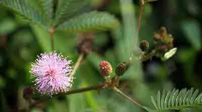 Contoh adaptasi tingkah laku pada tumbuhan