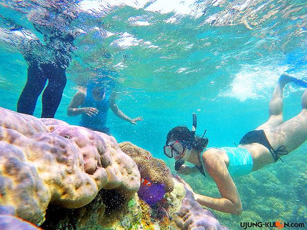 spot-snorkeling-ujung-kulon