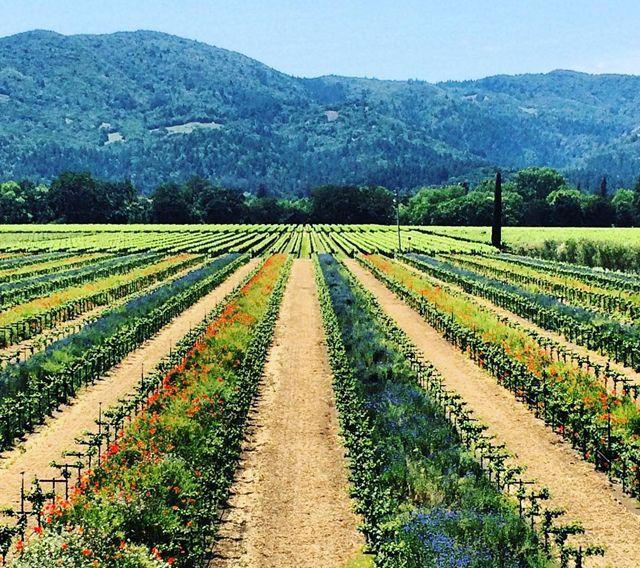 Wisata Negeri Anggur Napa & Sonoma, Wajib Bagi Traveler Untuk Coba Jalan-Jalan Kesana