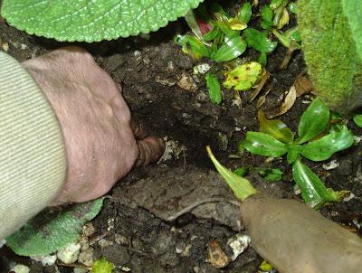 How to plant bulbs beginner's guide Green Fingered Blog