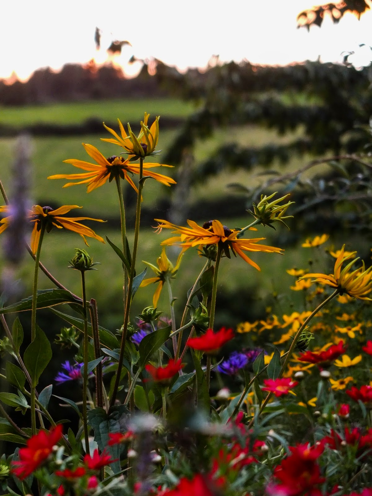 Different types and colours of flowers at sunset.