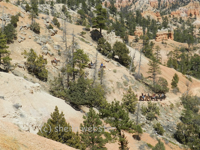 The horses and mules take the riders down the trail
