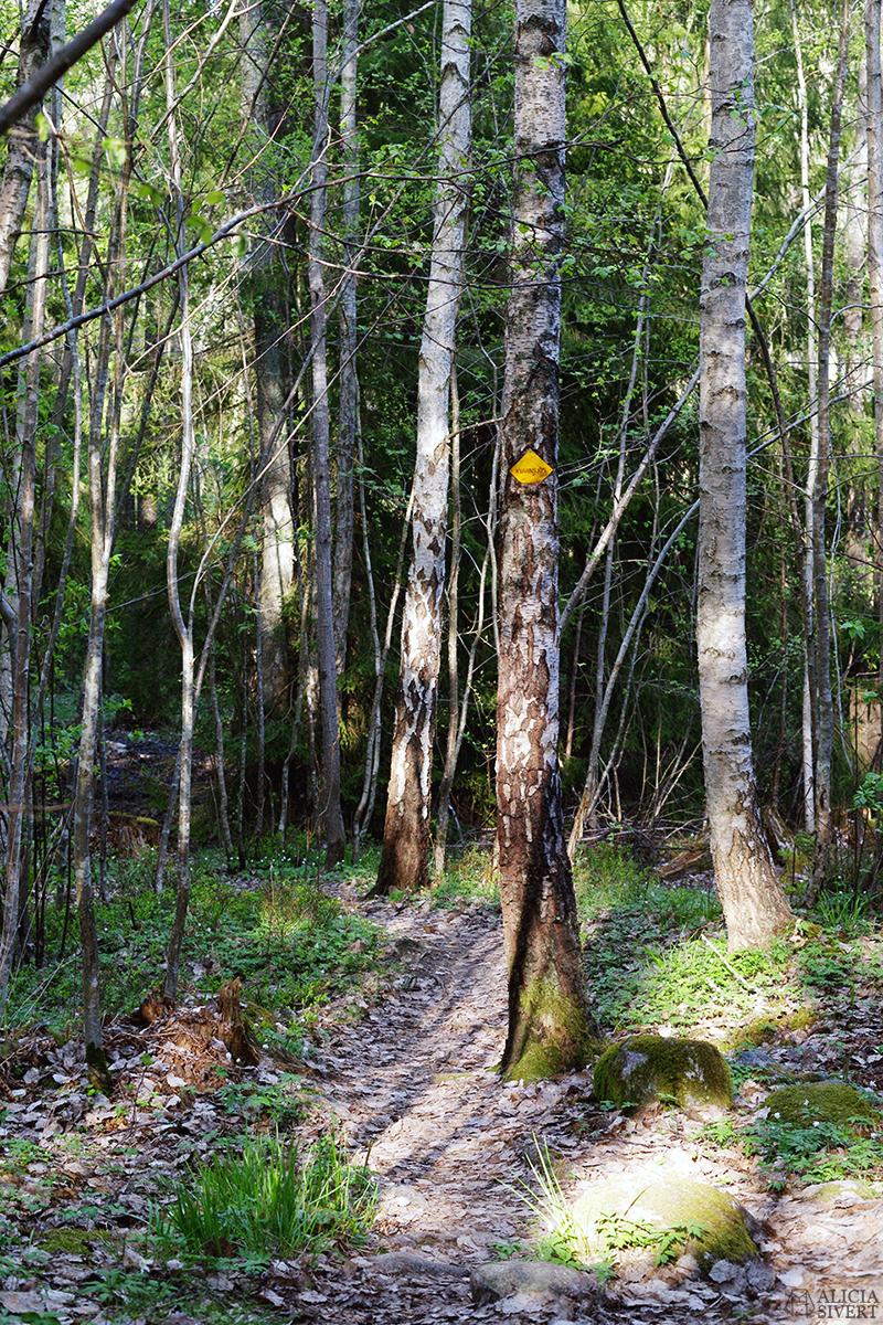 skog skogen utflykt promenad hajk gå ut i naturen natur scout scouting dagsutflykt utflykt utan övernattning packa packning verktyg redskap vad ska man ha med sig förberedelse förbereda sig ryggsäck vandra vandring scouting