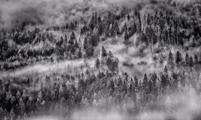 Das war ein grauer und wirklich ungemütlicher Tag! Aber Nebelwolken in Baumwipfeln haben doch was, oder?