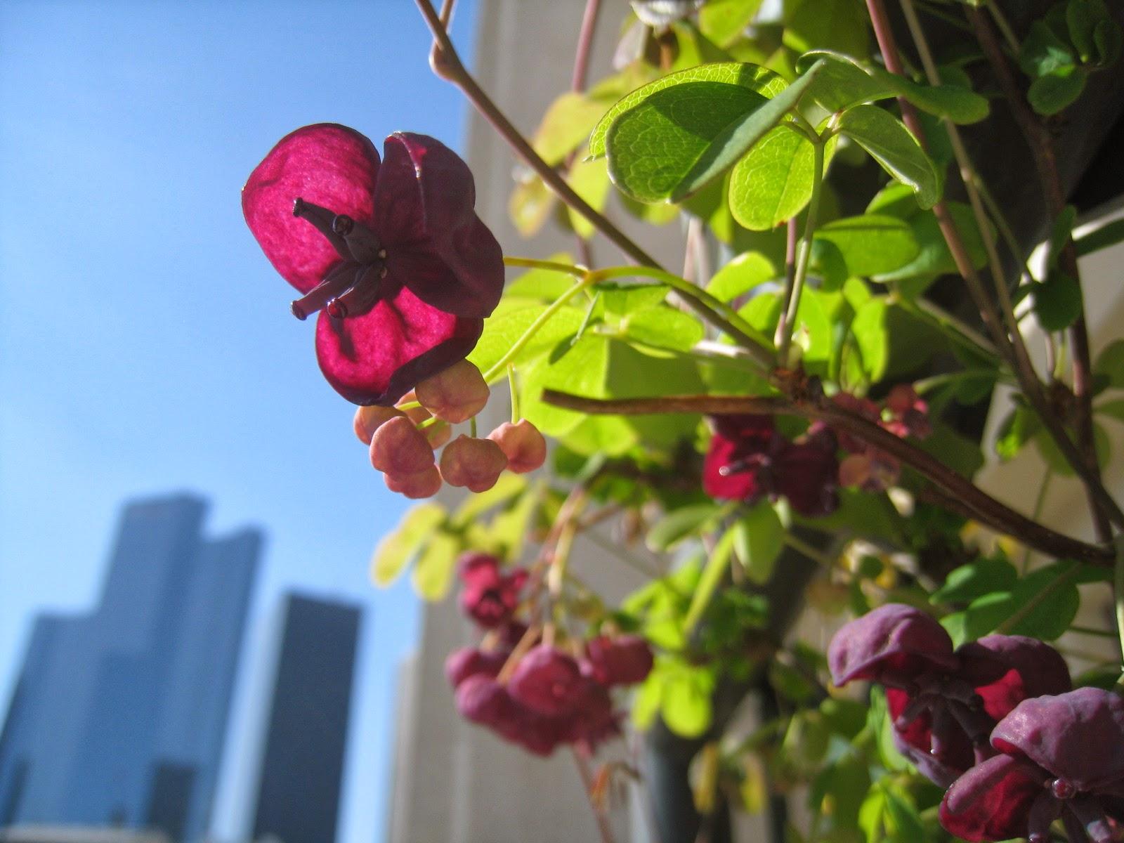 passion terrasse des fleurs de couleurs prune blanche rose parme et rouge. Black Bedroom Furniture Sets. Home Design Ideas