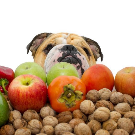 Frutta e verdura nociva ai cani okanimali for Quali verdure possono mangiare i cani
