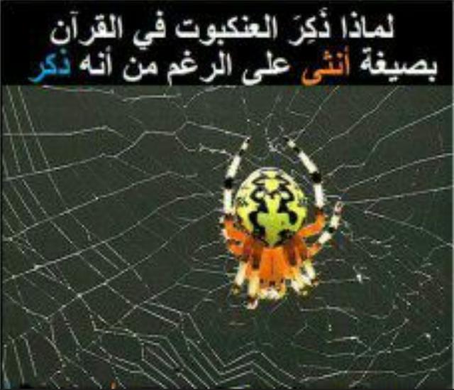 لماذا ذكر العنكبوت في القرآن بصيغة أنثى على الرغم من أنه ذكر؟!