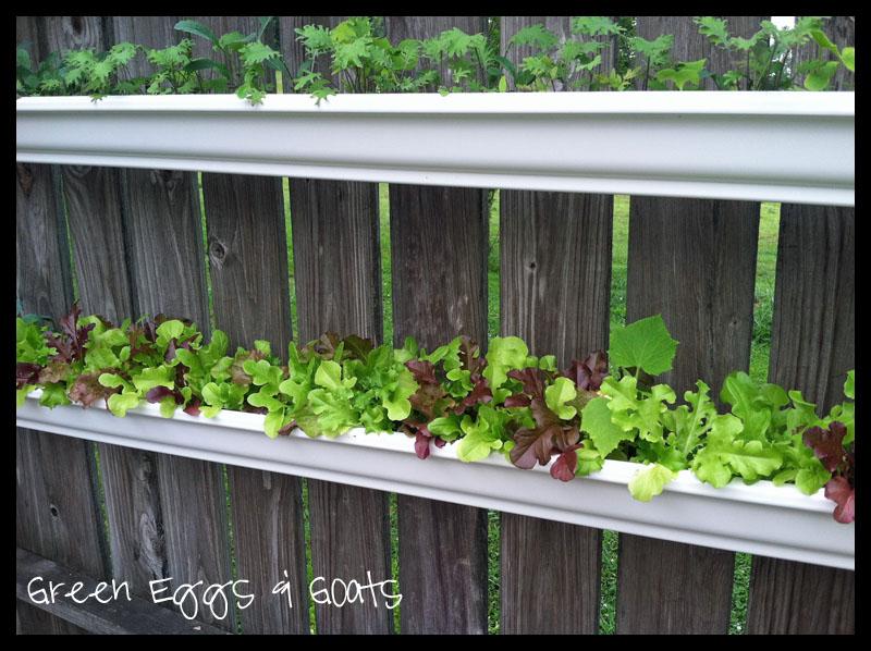Gutter Garden. An Update