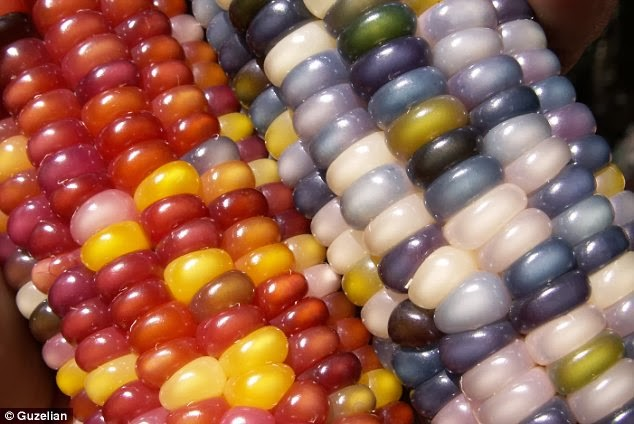 Gem glass corn
