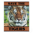 SAVE THE TIGERS | Syed Ashfaque ali