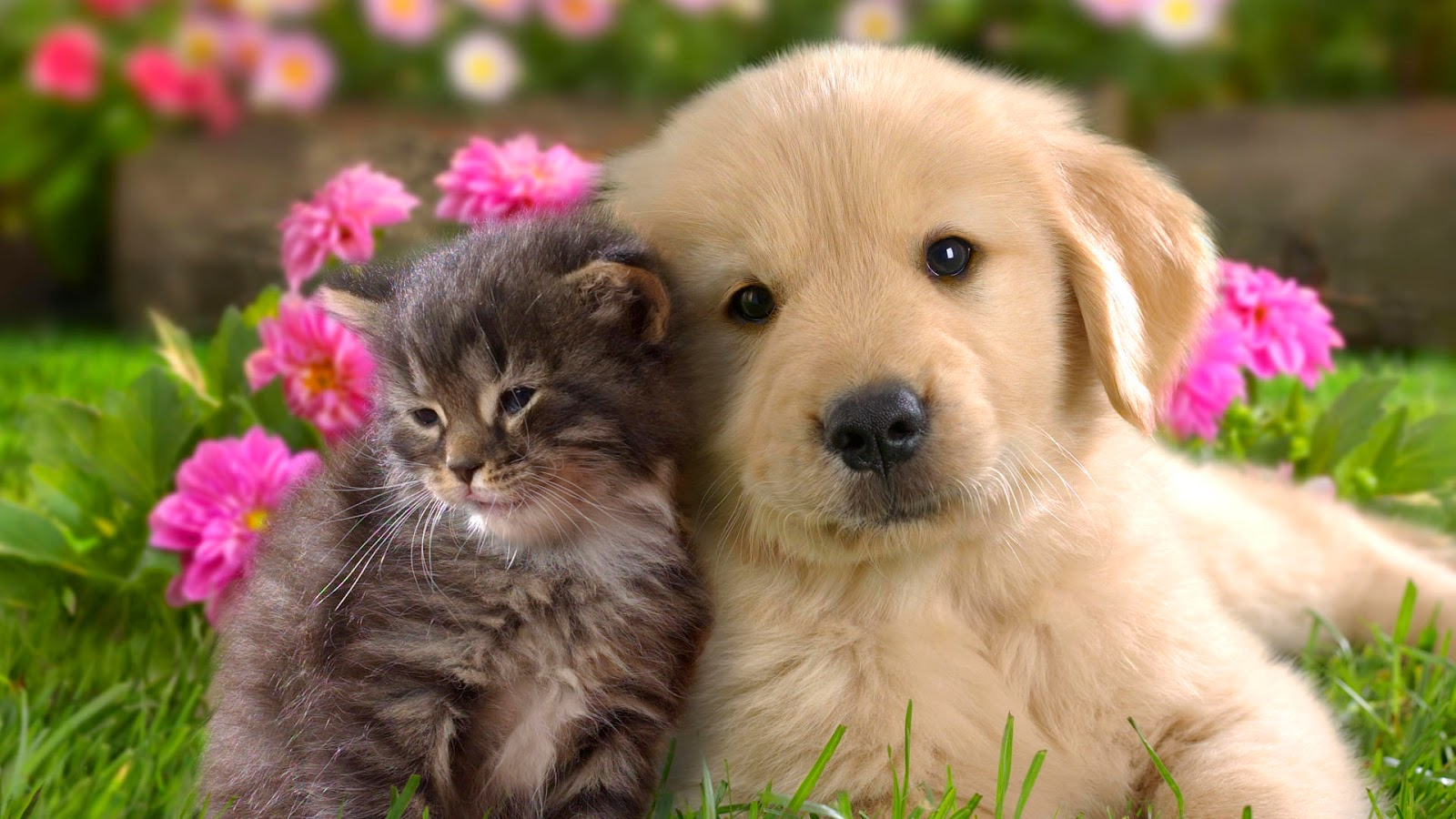 Cute Animal Wallpapers HD 4
